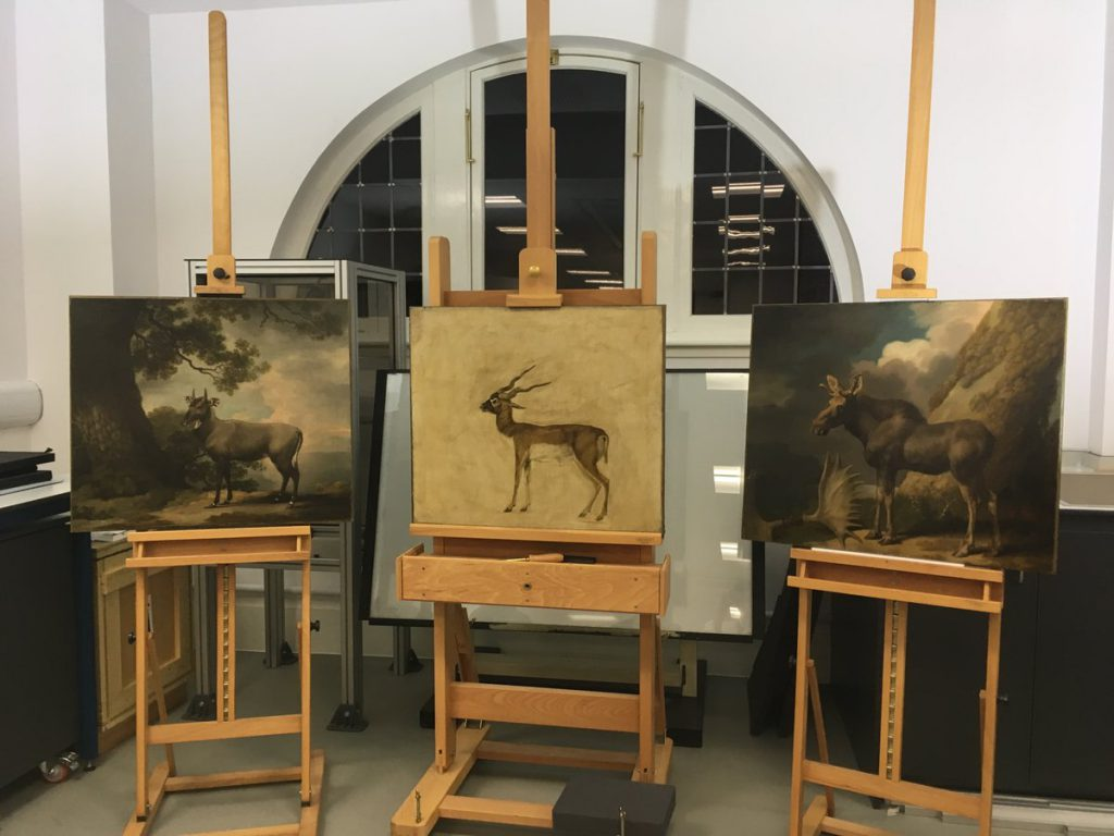 Colour photograph showing three paintings on easels for inspection, namely The Nilgai, A Blackbuck, and The Moose by George Stubbs, from The Hunterian Collection (courtesy of The Hunterian)