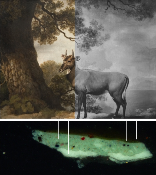 Collage of photographs illustrating the Technical Art History Group's contributions to the Take an Object exhibition at the Hunterian in 2019. The photographs show the painting of The Nilgai by George Stubbs, together with an Infrared image that shows that Stubbs used a black pigment to define the lines of the Nilgai (along the back, tail and legs) rather than as an under drawing on which to apply paint, and a cross-section taken from the left-hand side shows the paint layers used in the tree trunk.